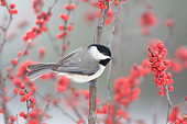 BRD 13 DA0017 01