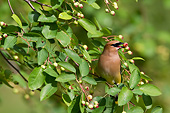 BRD 13 DA0038 01
