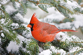BRD 13 DA0045 01