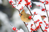BRD 13 DA0047 01
