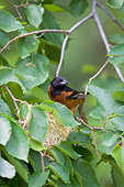 BRD 13 DA0068 01