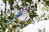 BRD 13 DA0089 01