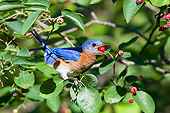 BRD 13 DA0095 01