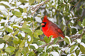BRD 13 DA0100 01