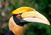 BRD 13 GL0001 01