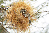 BRD 13 GL0010 01
