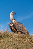 BRD 13 GL0013 01