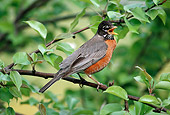 BRD 13 GR0004 01