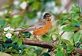 BRD 13 GR0005 01