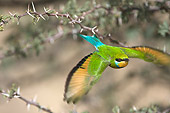 BRD 13 HP0001 01