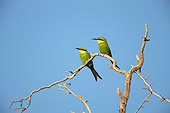 BRD 13 HP0002 01