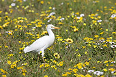 BRD 13 HP0006 01