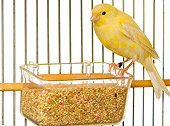 BRD 13 JE0004 01