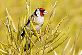 BRD 13 KH0002 01