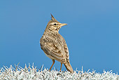 BRD 13 KH0007 01