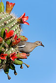 BRD 13 KH0010 01