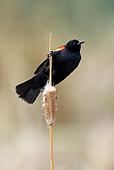 BRD 13 KH0012 01