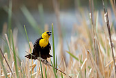 BRD 13 KH0013 01