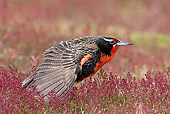 BRD 13 KH0025 01