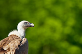 BRD 13 KH0026 01