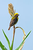 BRD 13 KH0027 01