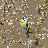 BRD 13 KH0029 01