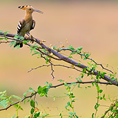 BRD 13 KH0038 01