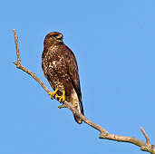 BRD 13 KH0042 01