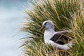 BRD 13 KH0044 01