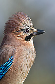 BRD 13 KH0046 01