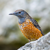 BRD 13 KH0047 01