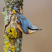 BRD 13 KH0048 01