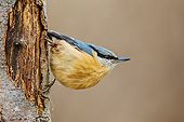 BRD 13 KH0049 01