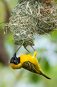 BRD 13 KH0057 01