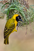 BRD 13 KH0059 01