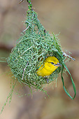 BRD 13 KH0060 01
