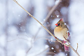 BRD 13 LS0007 01