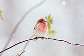 BRD 13 LS0009 01