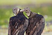 BRD 13 LS0018 01