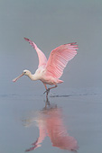 BRD 13 LS0019 01