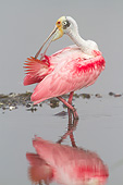 BRD 13 LS0021 01