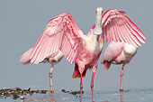 BRD 13 LS0023 01