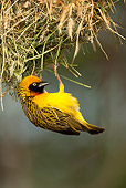 BRD 13 MC0004 01