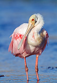 BRD 13 MC0009 01
