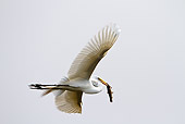 BRD 13 MC0017 01