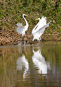 BRD 13 MC0018 01