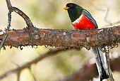 BRD 13 MC0025 01