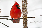 BRD 13 MC0029 01