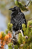 BRD 13 MC0031 01