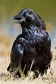 BRD 13 MC0032 01